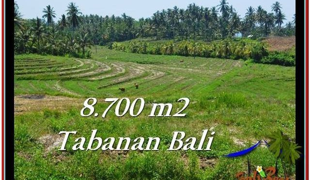DIJUAL TANAH di TABANAN BALI 8,700 m2 di Tabanan Selemadeg