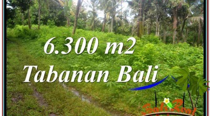 JUAL TANAH di TABANAN 6,300 m2 di Tabanan Selemadeg