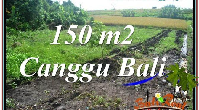 JUAL TANAH MURAH di CANGGU BALI 1.5 Are View sawah