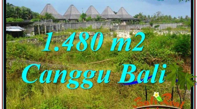 TANAH MURAH di CANGGU 1,480 m2 di Canggu Pererenan