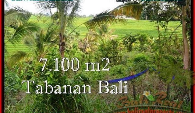 TANAH di TABANAN JUAL MURAH 7,100 m2 View sawah dan Kebun
